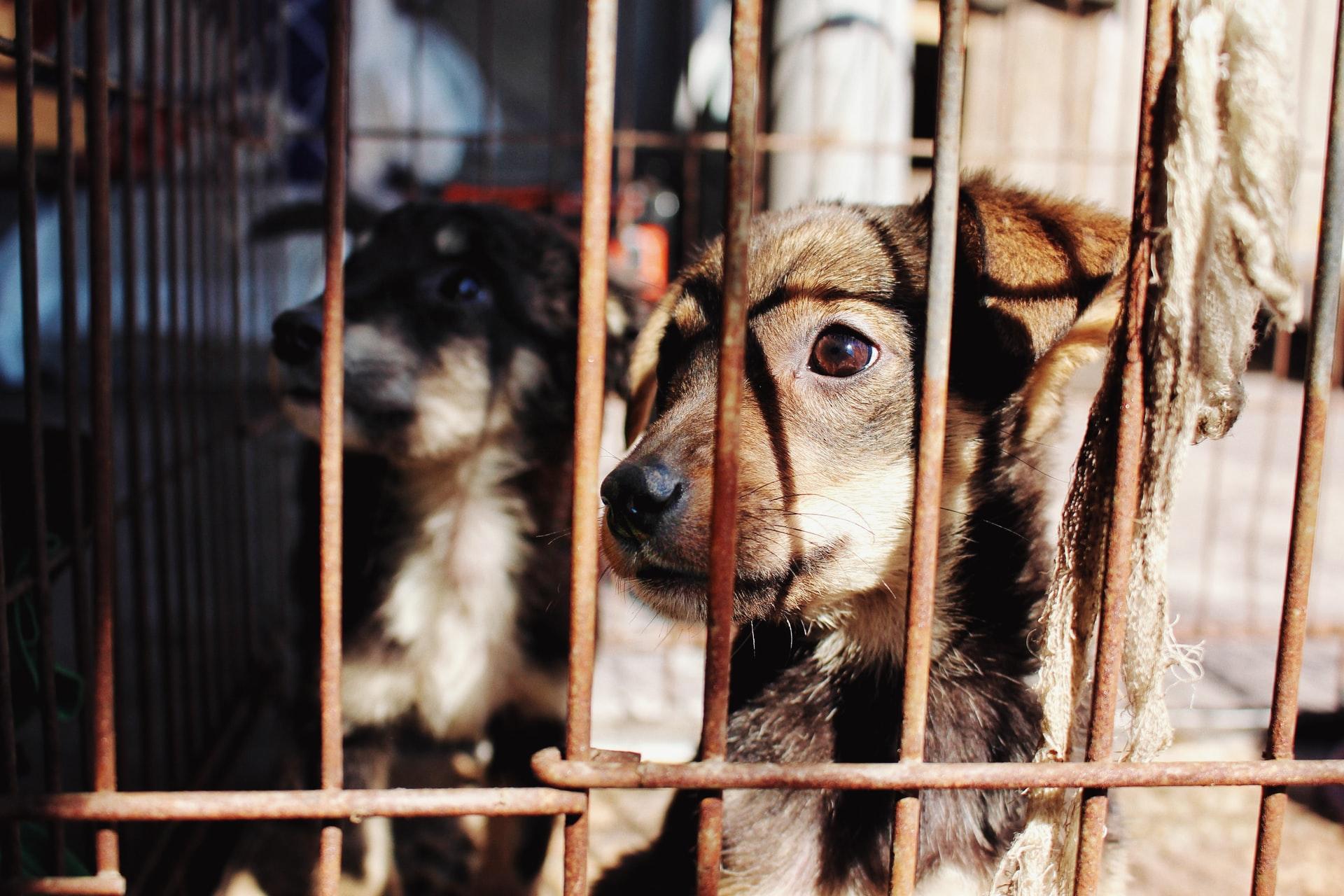 Bien-être animal : que contient le projet de loi LREM