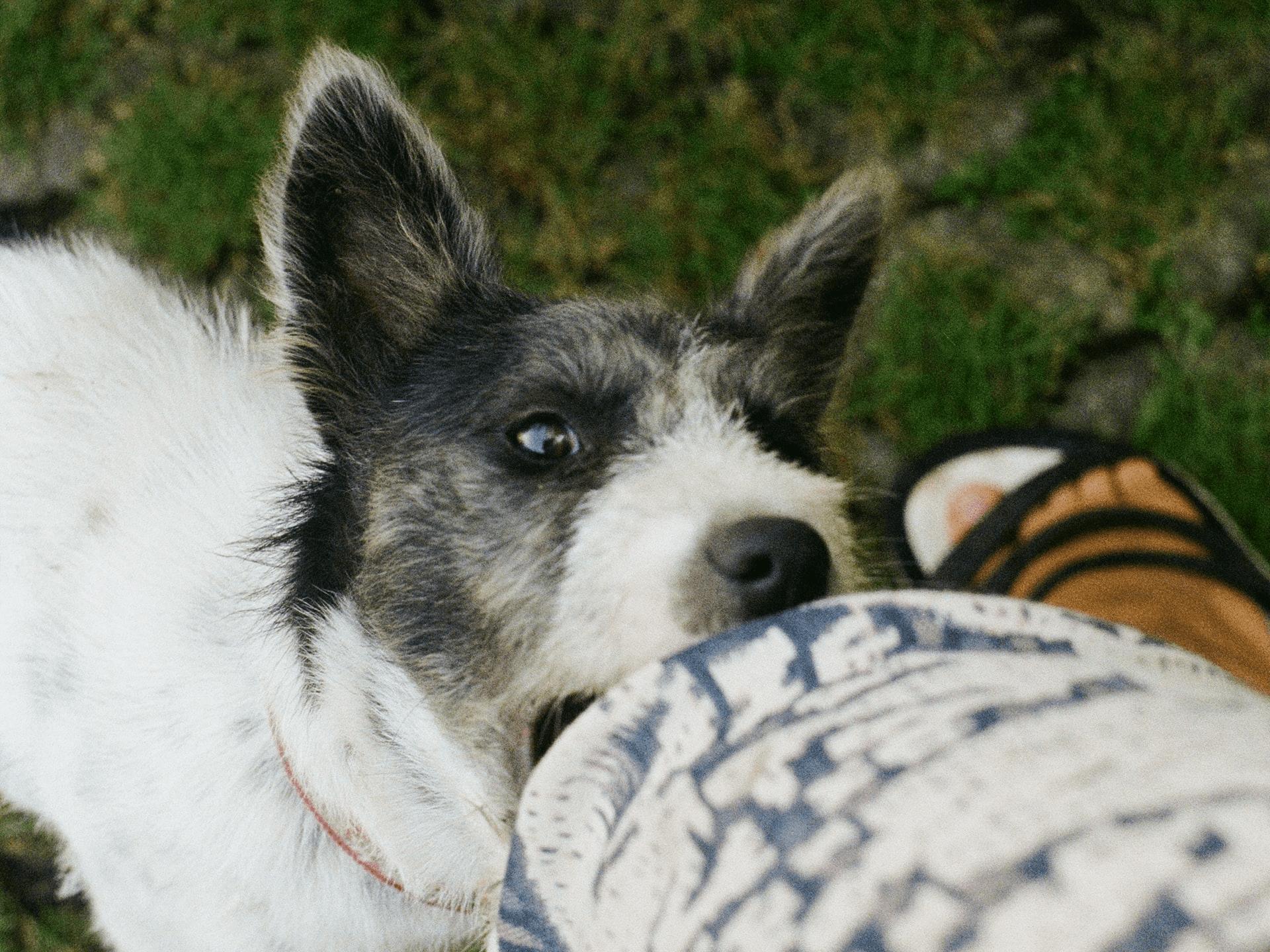 dog-biting-min